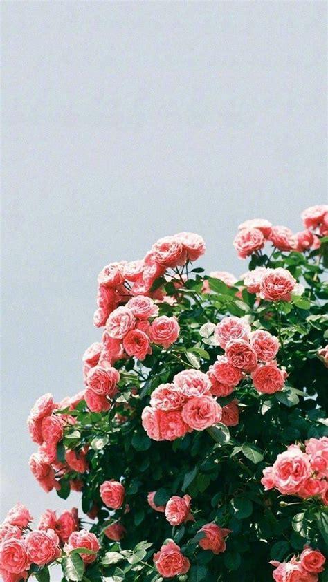 pinterest atjoyfulgrace flower aesthetic