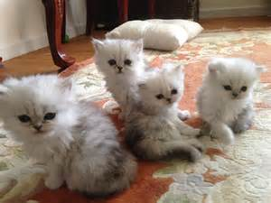 cats cats cats kittens for you home of the
