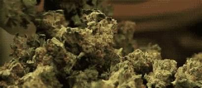 Stocks Marijuana Market