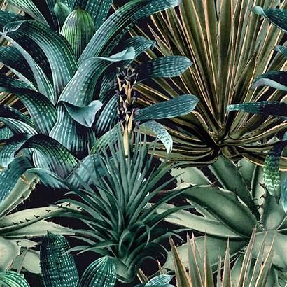 Succulents Lush Gap Mind Mindthegap Wallpapers Succulent