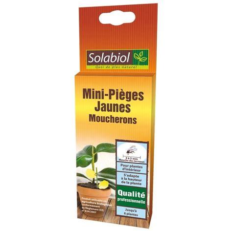 produit contre les moucherons cuisine mini pièges jaunes moucherons et mouches des terreaux