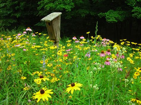 Why Plant Native Plants?  Kalamazoo Area Chapter Of Wild