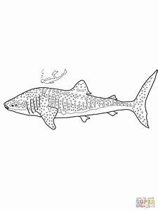 Whale Shark Coloring Page Free Printable Coloring Pages
