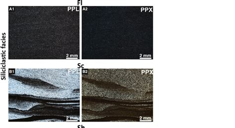 macroscopic  microscopic facies images    fl