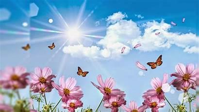 Flower Widescreen Wallpapers Flowers Baltana