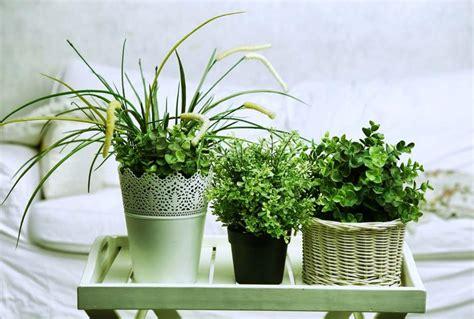 plante verte pour chambre 5 plantes d intérieur pour décorer la chambre à coucher et
