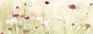 Titelbilder Facebook Ideen : spring blossoms pink flowers cool facebook timeline covers ~ Lizthompson.info Haus und Dekorationen