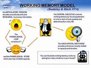 Image, Result, For, Baddeley, U0026, 39, S, Model, Of, Working, Memory