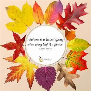 autumn quotes_luzdelaluna_1 - Luzdelaluna