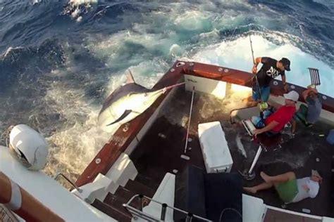 Marlin Jumps In Boat by Black Marlin Jumps In Boat Shenhuifu