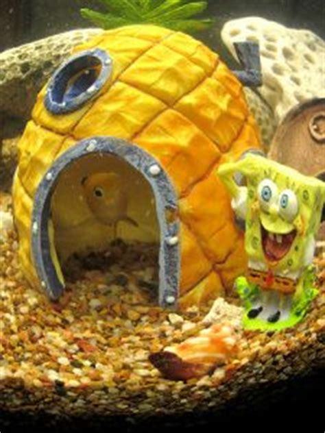 Spongebob Fish Tank Ornaments Uk by 1000 Images About Interiors On Pinterest Fish Tanks