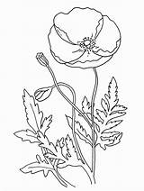 Poppy Coloring Pages Flower Poppies Anzac Flowers Template Remembrance Printable Colouring California Sheets Simple Drawing Drawings Many Templates Activities Children sketch template