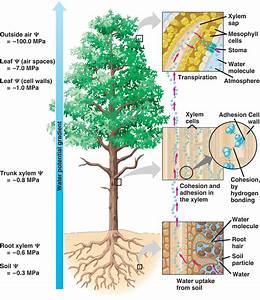 Biology 2108