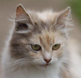 Tag For Nice Cat Walpaper  Julia Voth Feet Legs Feetpedia
