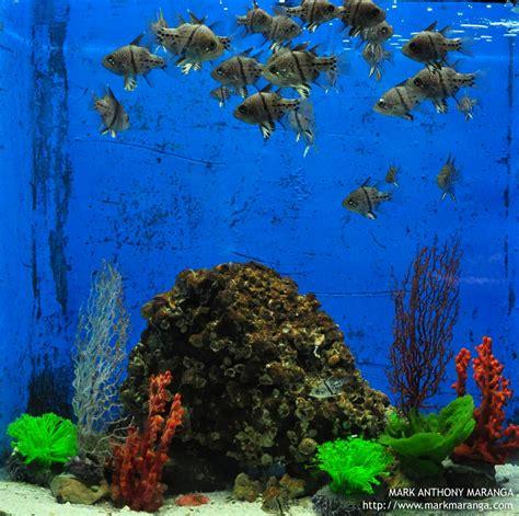 manila ocean park philippines  guide