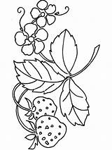Strawberry Coloring Pages Berries Plant Print Fruits Printable Colors Getcolorings Recommended sketch template