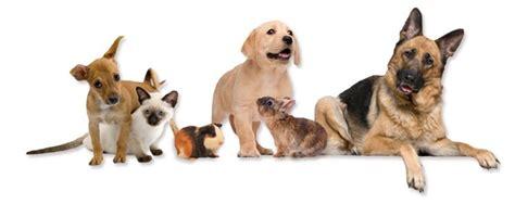 monday musing prevention  cruelty  animals month