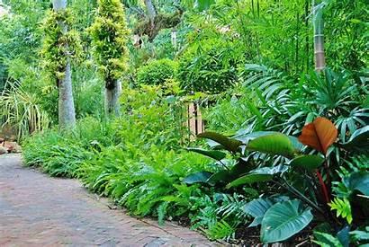Tropical Landscaping Garden Miami Landscape Florida South