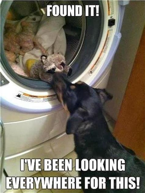 morning funny animal picture dump  pics
