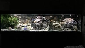 Die Besten Aquarien : die besten 25 malawi aquarium ideen auf pinterest ~ Lizthompson.info Haus und Dekorationen