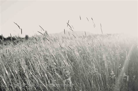 White Grass Pictures To Pin On Pinterest
