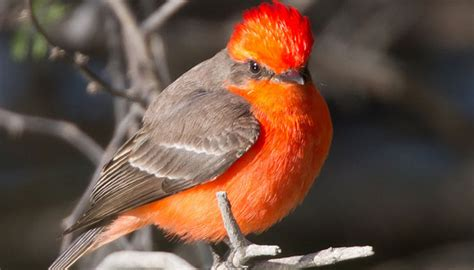 bird watching in the texas hill country texas hill country