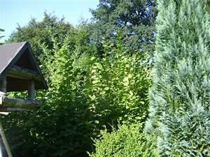 Baum Fällen Kosten Forum : walnussbaum schneiden wann baumschnitt walnussbaum was ~ Jslefanu.com Haus und Dekorationen