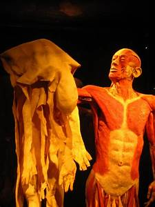 34 Best Body Worlds Exhibit Images On Pinterest