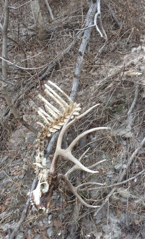 Moose Shed Antler Forums by Joe S Elk Sheds Monstermuleys