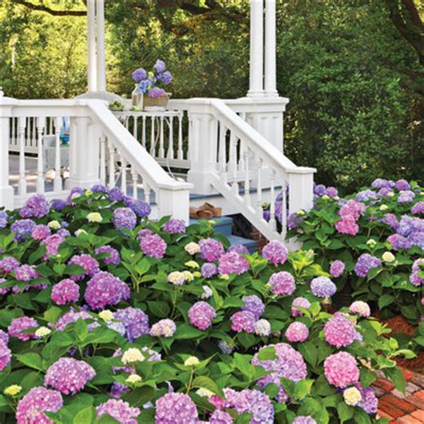 change  hydrangea color southern living