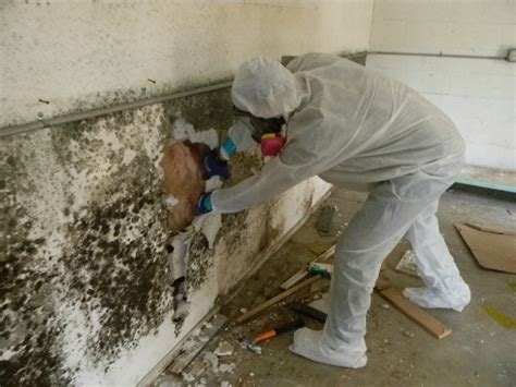 How To Clean Mold And How To Clean The About Mold Removal And Mold Remediation Moldmanusa