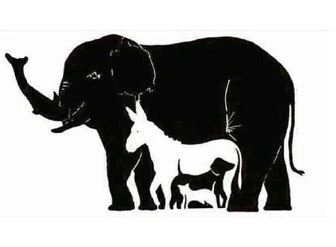 desafio enlouquece  web quantos animais voce ve