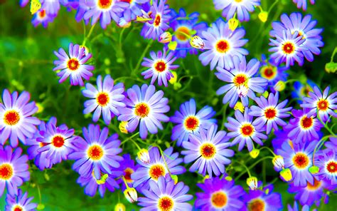 Top 20 Flowers Wallpapers  Good Hd Wallpapers