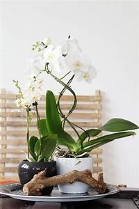 Orchideen Im Glas Dekorieren : tag der orchidee styling am deko donnerstag ~ Watch28wear.com Haus und Dekorationen