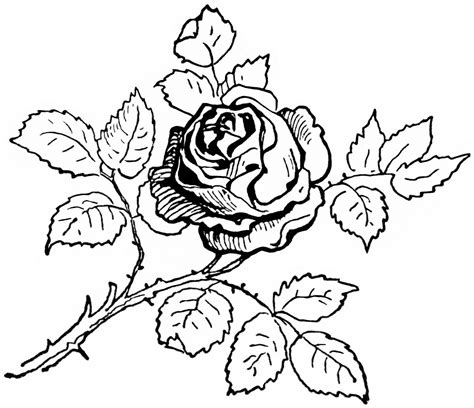 rose coloring pages coloringpages