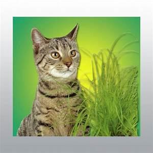 Graine Herbe A Chat : mat riel v t rinaire herbe chat alimentation coveto ~ Melissatoandfro.com Idées de Décoration