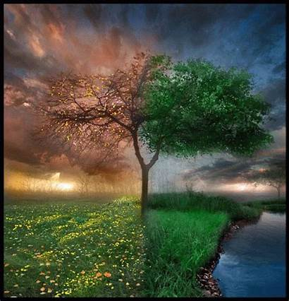 Nature Animation Seasons Gifs Change Beltane Decent