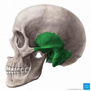 The Temporal Bone
