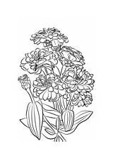 Coloring Flowers Zinnia Age Youth Drawing Printable Supercoloring sketch template