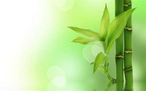 green bamboo plants photography hd wallpaper preview
