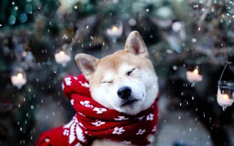 galeria de imagenes fondos de pantalla de perros