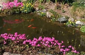 Goldfische Im Teich : fischfutter f r goldfische im aquarium und teich richtig f ttern ~ Eleganceandgraceweddings.com Haus und Dekorationen