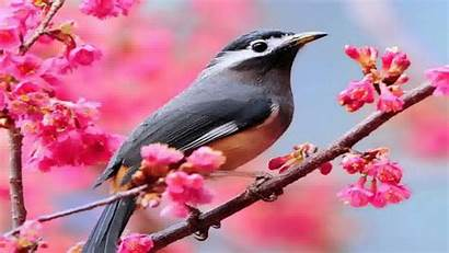 Bird Wallpapers Birds Backgrounds Desktop