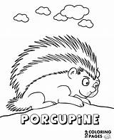 Porcupine Coloring Topcoloringpages African Rare sketch template