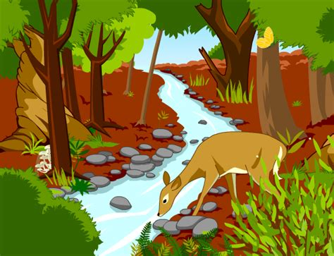 Forests Lesson Plans And Lesson Ideas