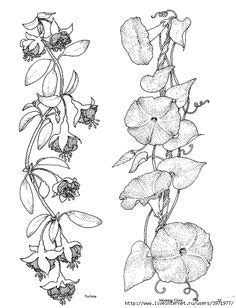 morning glory tattoo black and white - Google Search | Morning glory tattoo, Sketches, Drawings