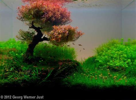 aquascape designs products 25 best ideas about aquascaping on aquarium