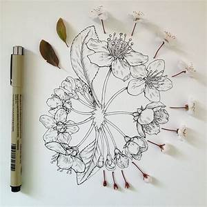 Flowers in Progress: Scientific Illustrator Taunts Us with ...