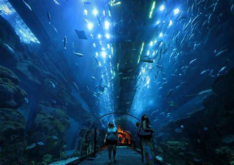 The 10 Best Dubai Aquarium & Underwater Zoo Tours