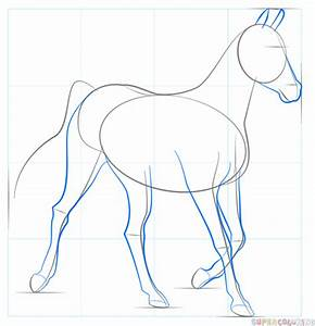 How To Draw A Realistic Horse Step By Step